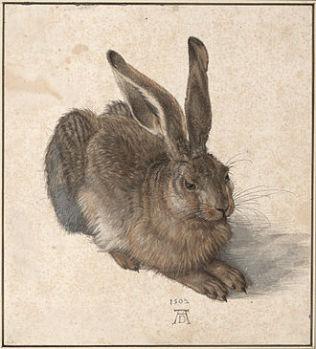 lièvre de Dürer